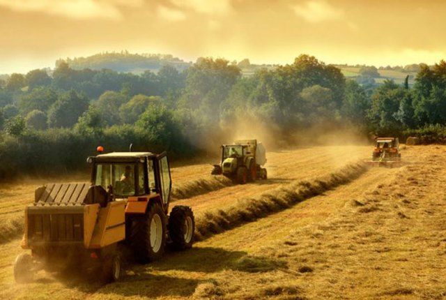 Фермерські господарства